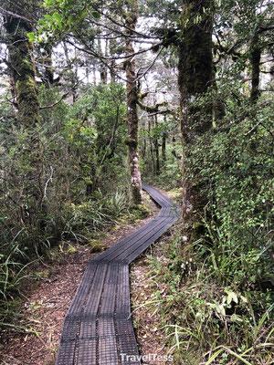 Hike  Tongariro National Park