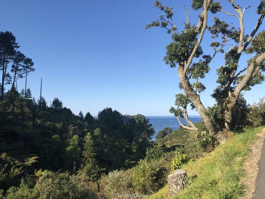 Groene omgeving van Hahei