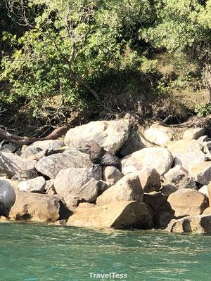 Zeehonden spotten Abel Tasman Park