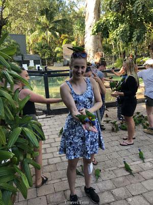Lori vogels voeren Koala Village