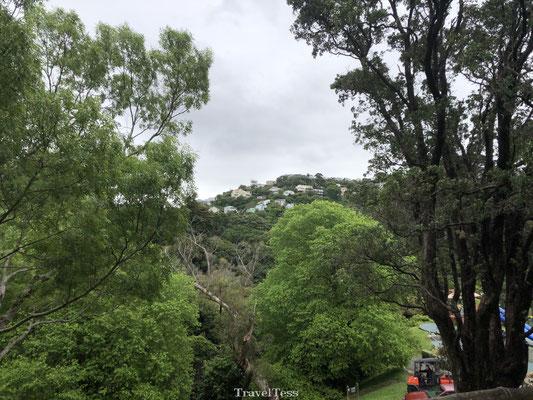 Botanische tuin van Wellington