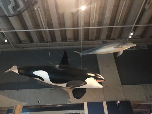Orka in Te Papa Museum