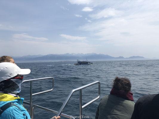 Walvissen tour Kaikoura