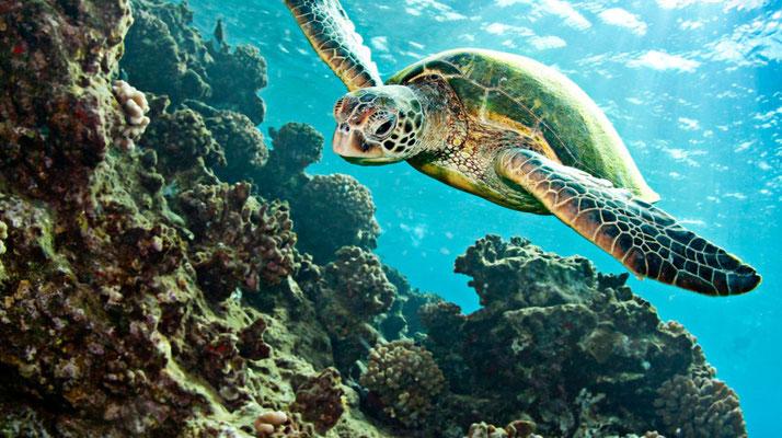 Schildpaddenstrand in regio Marmaris