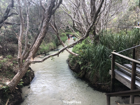 Eli's Creek Fraser Island