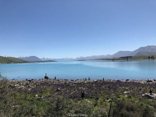 Lake Tekapo: één van de mooiste plekken ter wereld