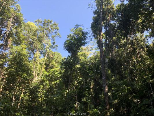 Regenwoud Australië