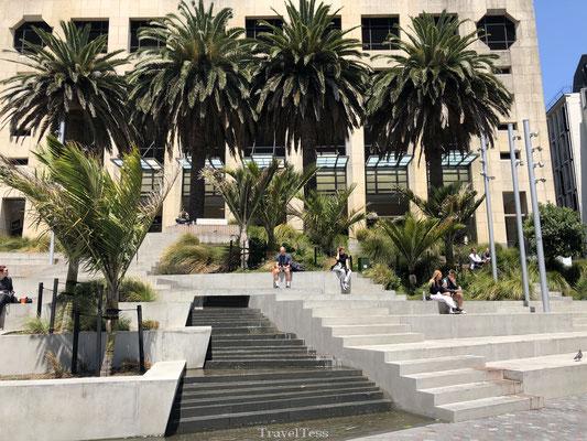 Palmbomen in Auckland