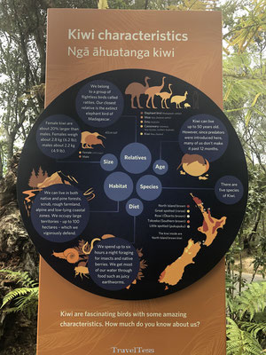 Afkomst kiwi's