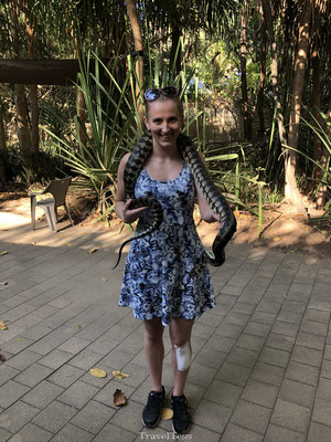Slangen Australië