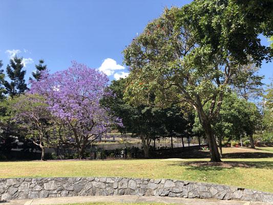 Brisbane Roma Street Park