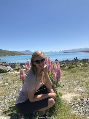 Roze lupinen Lake Tekapo