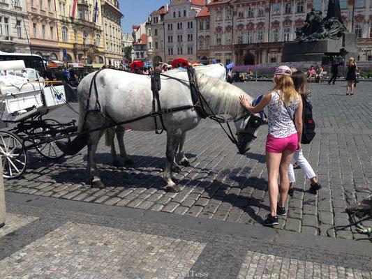 Paardenkoets Praag