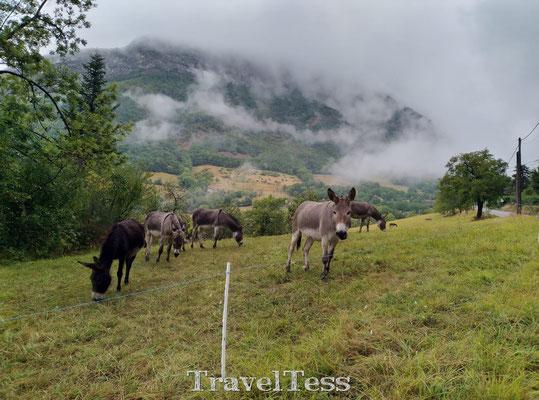 Ezels in de Franse Alpen