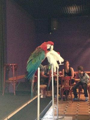 Clube Praia da Oura vogelshow