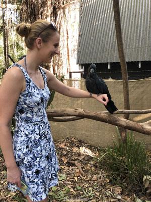 Papagaai vasthouden Koala Village