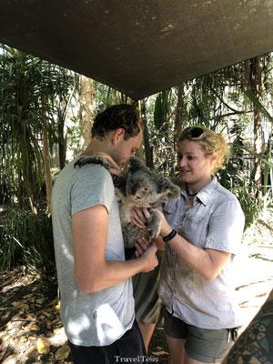 Koala vasthouden Magnetic Island