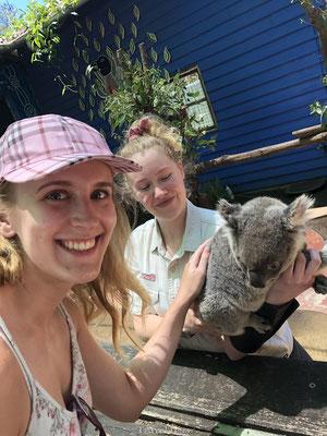 Koala aaien