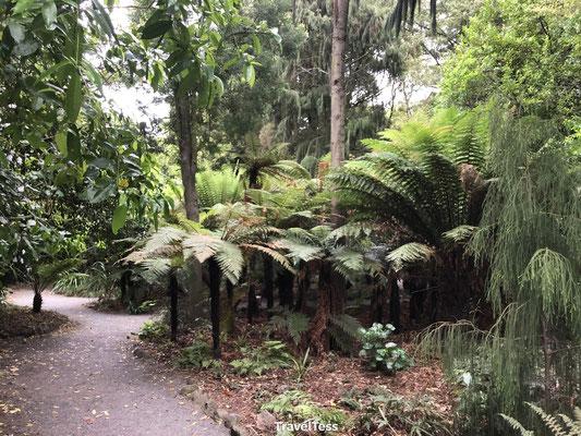 Oude planten in botanische tuin van Christchurch
