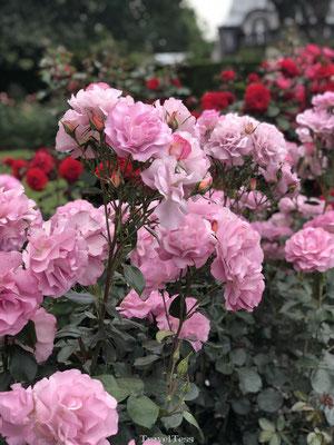 Mooie bloemen in Botanische Tuin van Christchurch