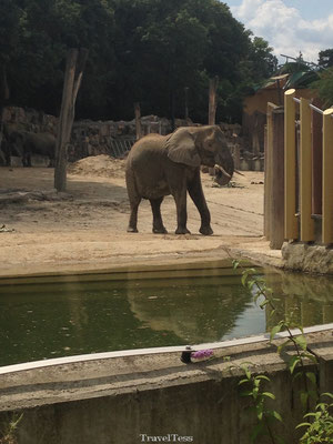 Olifant in Tiergarten Zoo