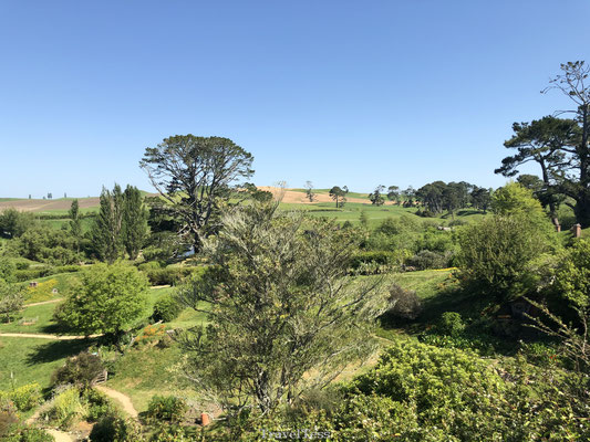 Hobbiton Movie Sets Tour