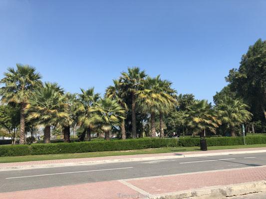 Wegen in Qatar