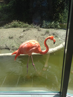 Flamingo Tiergarten Zoo