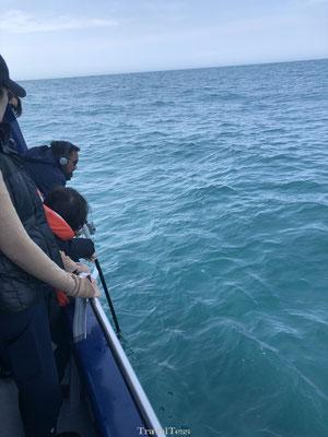 Sonar geluiden opvangen walvissen