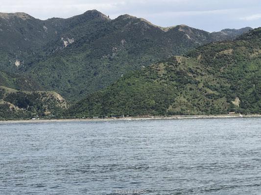 Dolfijnen in zee Kaikoura