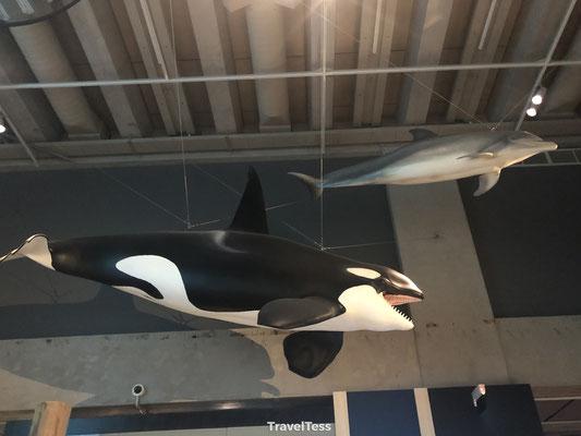 Te Papa Museum orka