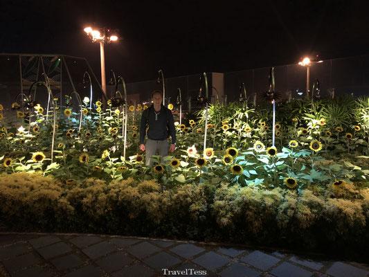 Sunflower Garden Singapore vliegveld