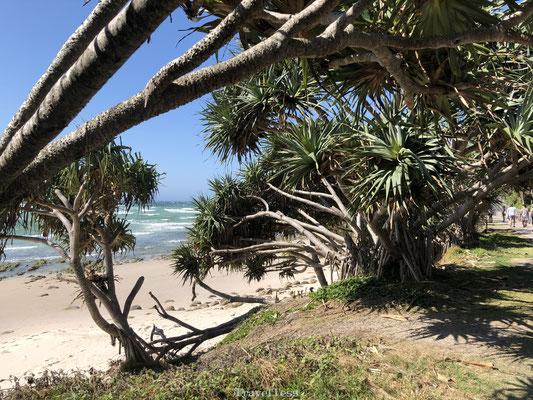 Mooie kust van Byron Bay