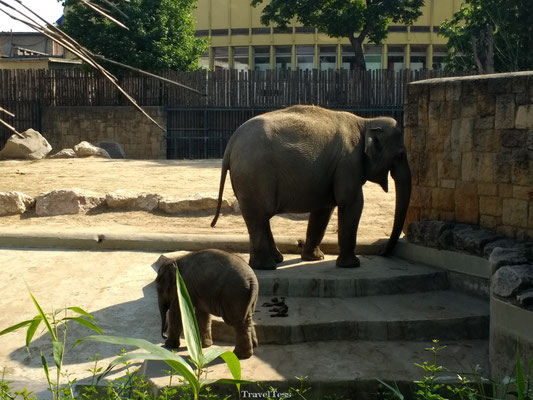 Boedapest Zoo olifanten