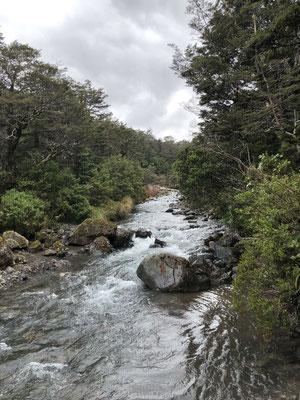 Beejkje vlakbij de Taranaki Falls
