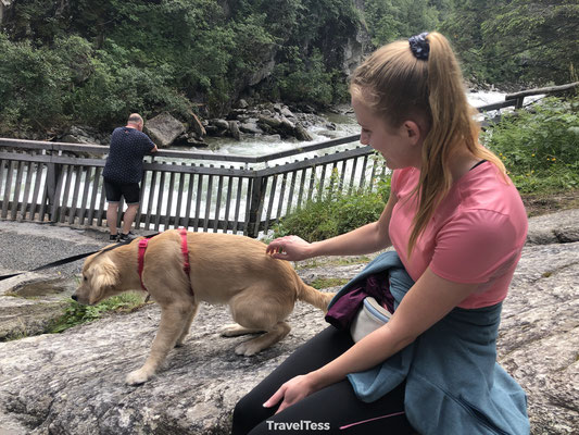 Hondje aaien bovenaan de waterval