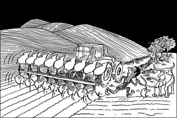 Großflächen in der Landwirtschaft _ Monokulturen