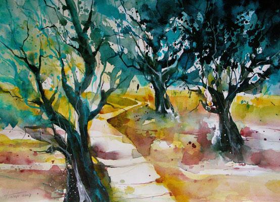 Serenata Mallorquine - Olivenbäume bei Soller