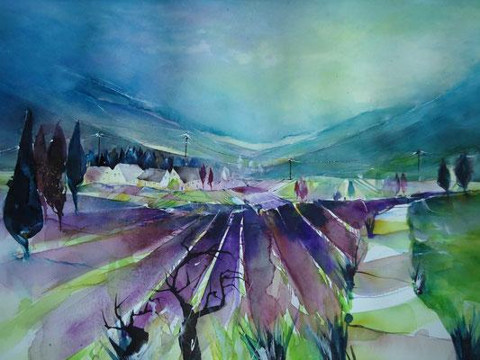 """La Provence"" - Lavendelfelder bei Sault F"