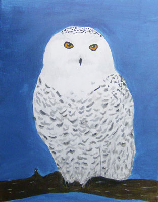 Snowy Owl, by Marcela