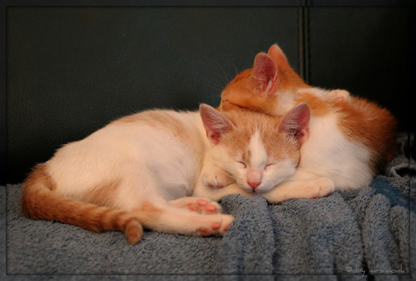 geschwisterliebe (caramella und orangette, okt. 2018)