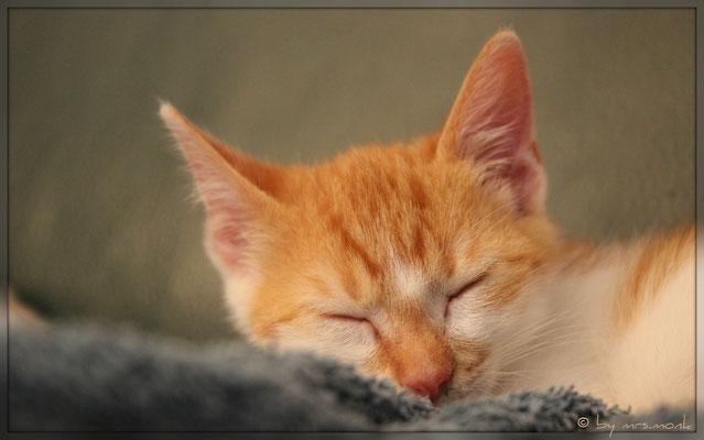 la-le-lu... (cat.orangette, okt. 2018)