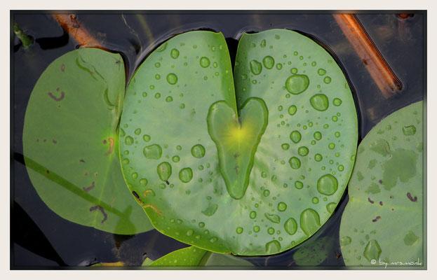 nicht gesucht und doch gefunden    #heartsofnature