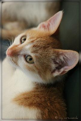 cat.orangette (okt. 2018)