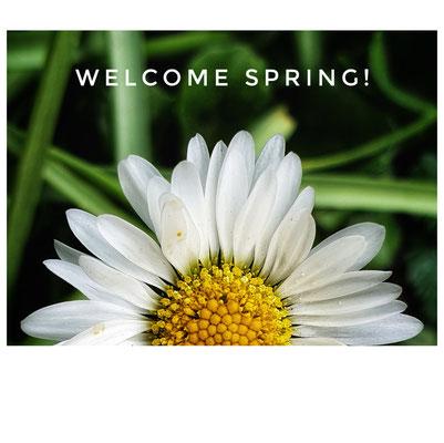 "frühlings""aufgang"" 😉😍. #welcomespring #springisinthetown #spring und trotzdem #stayhome #fightcorona #gardenmoments #luftschnappen #gänseblümchen #daisy #likealittlesun #beautyofnature #innehaltenundsehen #pauseandsee #beautyisinthedetails"