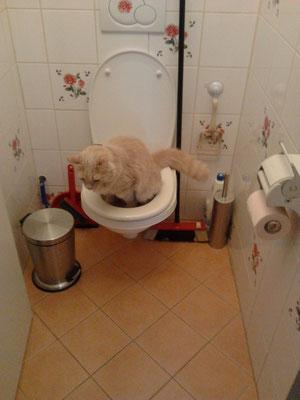 Toilettentraining mit den Stubentiegern