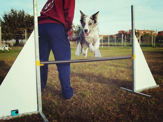 Agility dog -Centro cinofilo Gasdog ( Torre del lago , Versilia , Viareggio , Lucca)