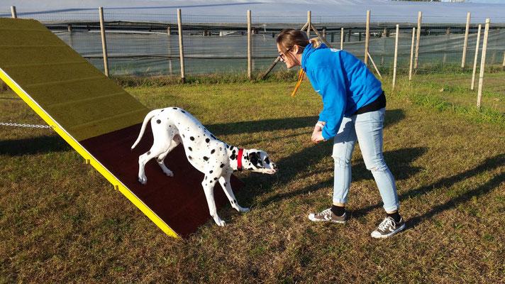 Agility dog - Centro cinofilo Gasdog ( Torre del lago , Versilia , Viareggio , Lucca)