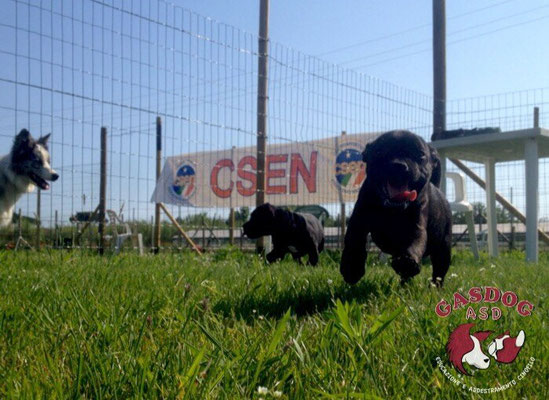 Puppy class - Centro cinofilo Gasdog ( Torre del lago , Versilia )