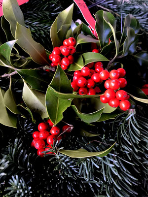 Ilex ist ein wundervoller Begleiter zum Tannengrün. Aber, es gibt die roten Beeren nicht jedes Jahr in voller Pracht.